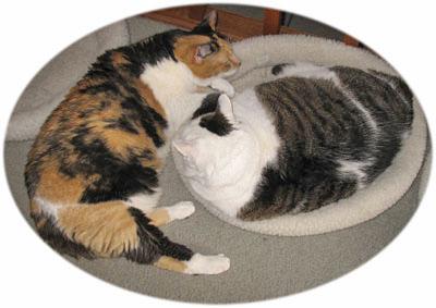 2-cats1.jpg