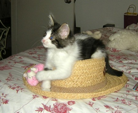 cat-on-the-hat